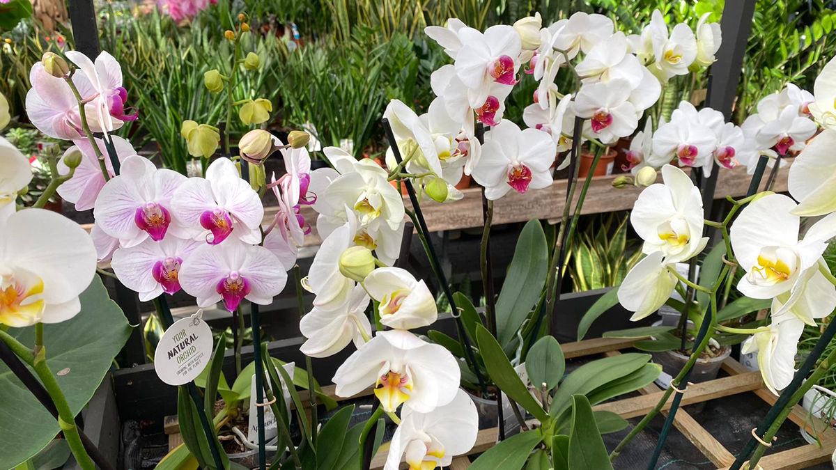 Orchideeën-afdeling-tuingroen-stadskanaal-5
