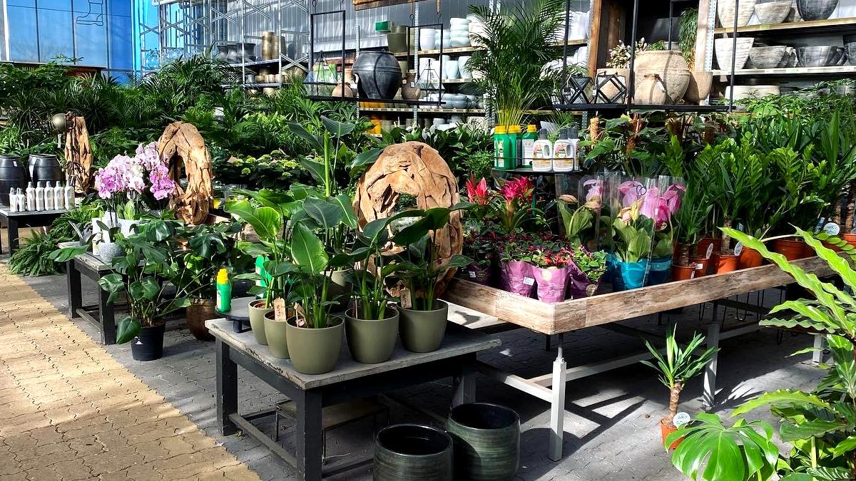 bloeiende-kamerplanten-tuingroen-stadskanaal-afdeling-20213