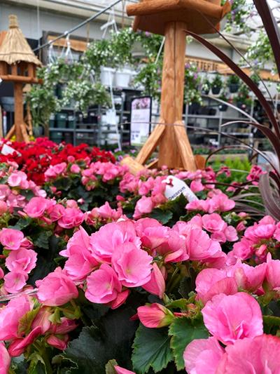 buitenplanten-perkplanten-tuinplanten-vaste-planten-tuingroen-stadskanaal-2