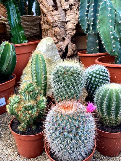 cactussen-kaarsen-tuingroen-stadskanaal-1