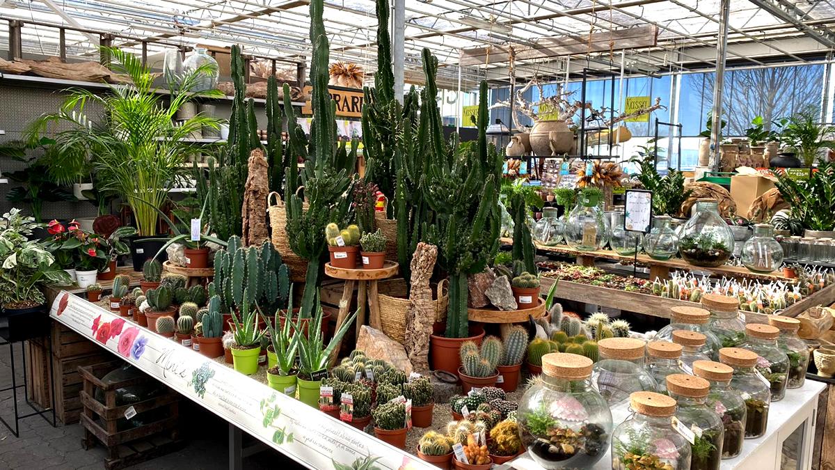 cactussen-tuingroen-stadskanaal-afdeling-20213