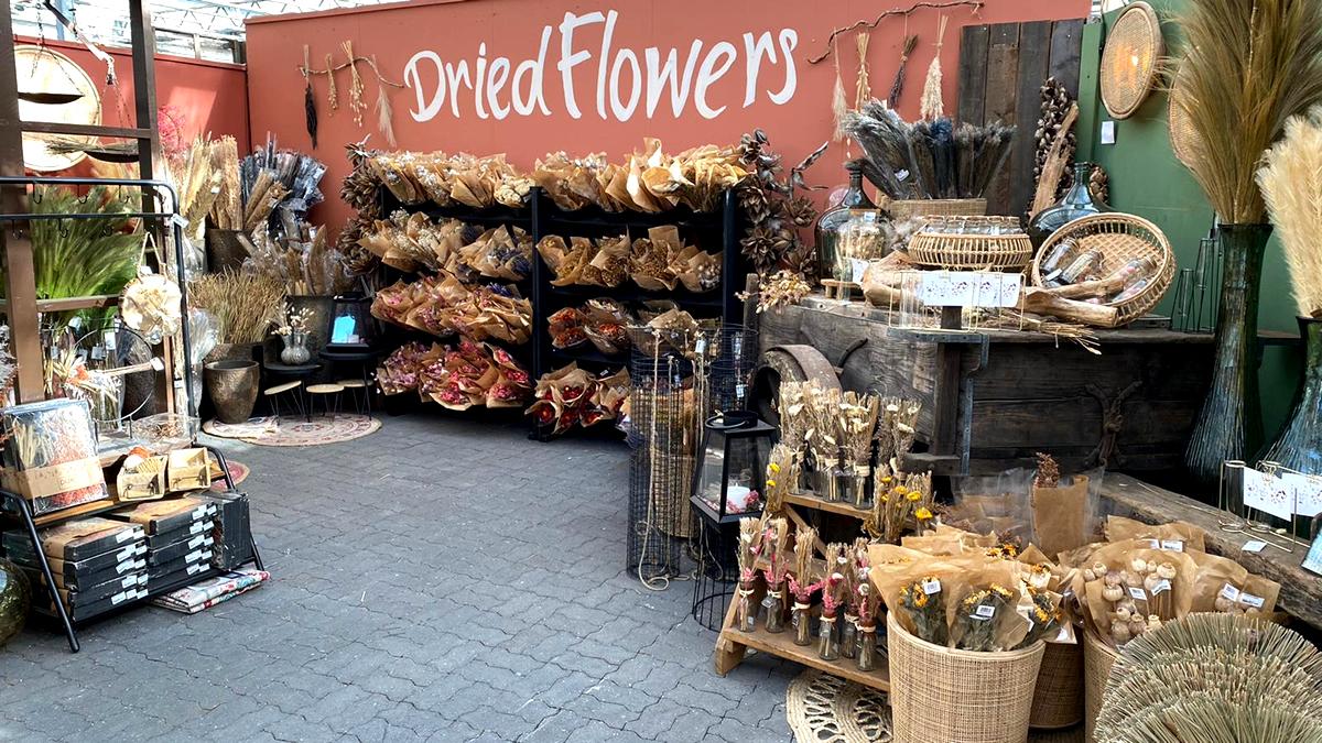 droogbloemen-dried-flowers-tuingroen-stadskanaal-afdeling-20213