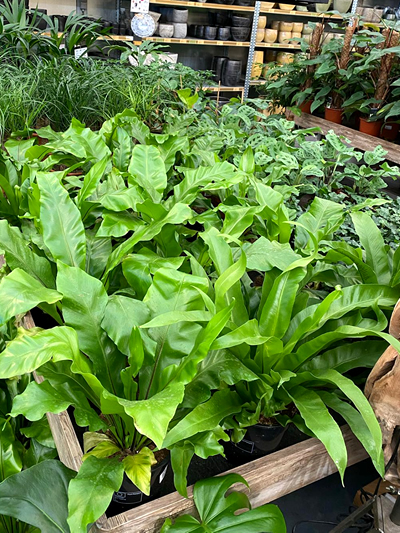 kamerplanten-tuingroen-stadskanaal-22