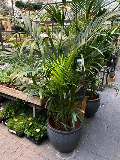 kamerplanten-tuingroen-stadskanaal-3