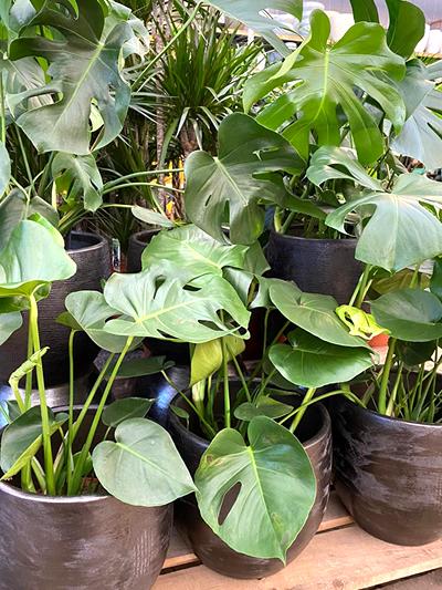 kamerplanten-tuingroen-stadskanaal-5