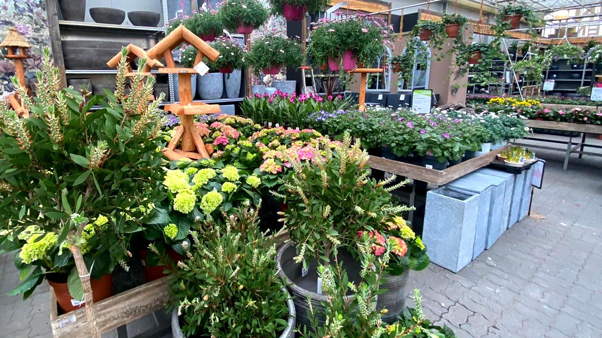 perkplanten-tuinplanten-vaste-planten-tuingroen-stadskanaal-afdeling-20213