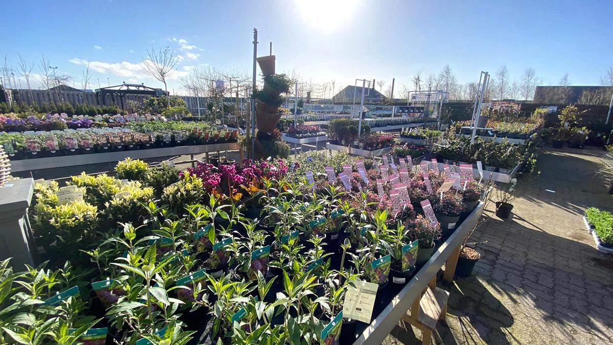 -tuingroen-stadskanaal-tuincetra-tuincetrum-noord-nederland-buitenplanten-perkplanten