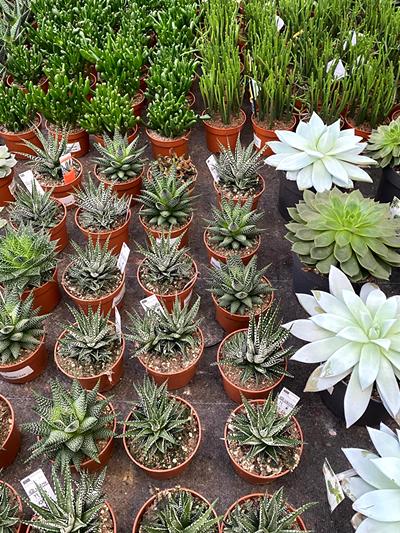 vetplanten-tuingroen-stadskanaal-tuinccentrum-noorden-1