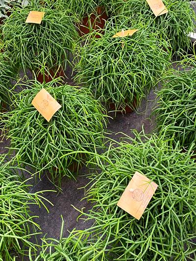 vetplanten-tuingroen-stadskanaal-tuinccentrum-noorden-5