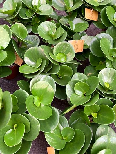 vetplanten-tuingroen-stadskanaal-tuinccentrum-noorden-6