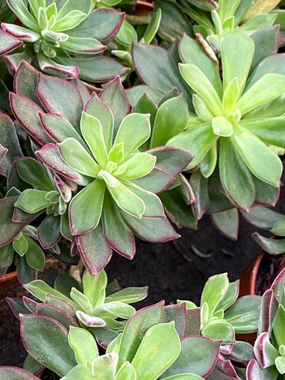 vetplanten-tuingroen-stadskanaal-tuinccentrum-noorden-7