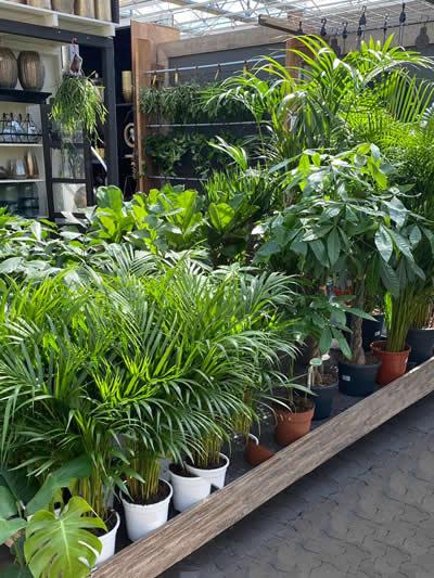 groene-kamerplanten-afdeling-tuingroen-stadskanaal-tuincentrum-5