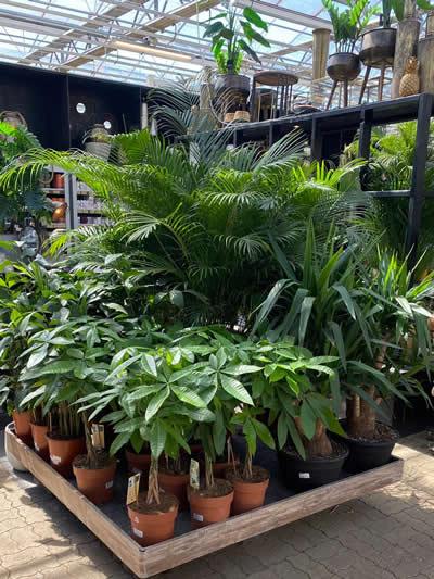 groene-kamerplanten-afdeling-tuingroen-stadskanaal-tuincentrum-6