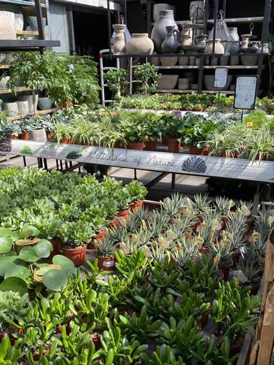 groene-kamerplanten-afdeling-tuingroen-stadskanaal-tuincentrum-8