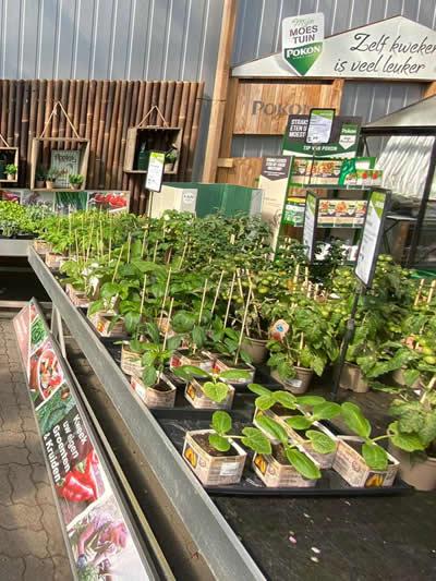 moestuin--tuingroen-stadskanaal-tuincentrum-3
