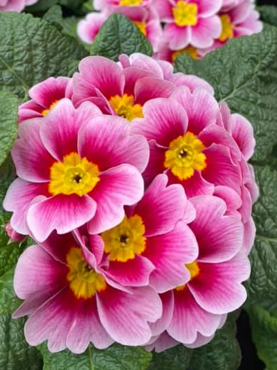 perkplanten-stadskanaal-tuinccentrum-noorden-9