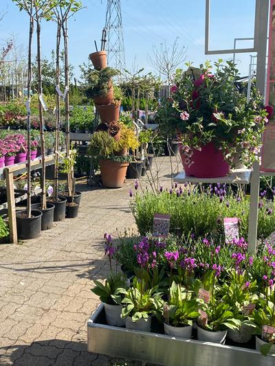 vaste-plantenn-stadskanaal-tuinccentrum-noorden-020