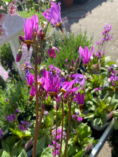 vaste-plantenn-stadskanaal-tuinccentrum-noorden-021