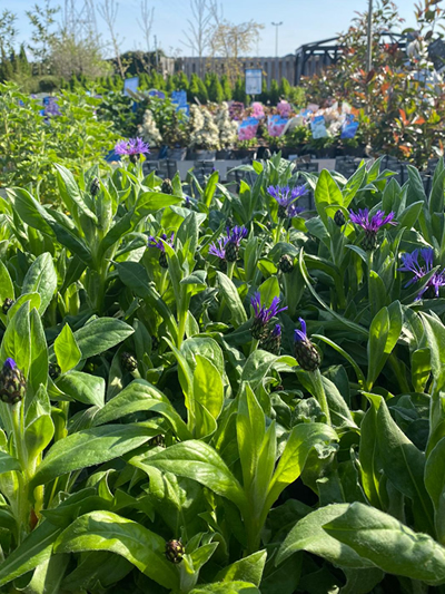 vaste-plantenn-stadskanaal-tuinccentrum-noorden-022
