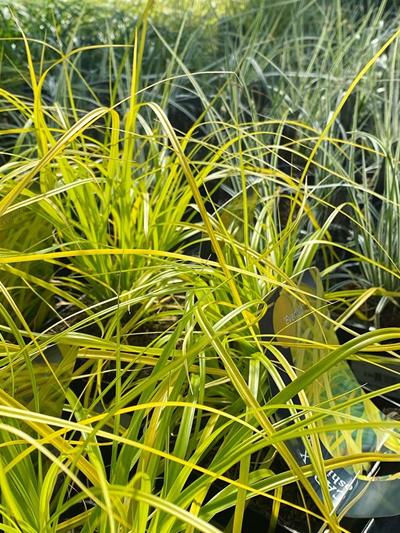 vaste-plantenn-stadskanaal-tuinccentrum-noorden-17