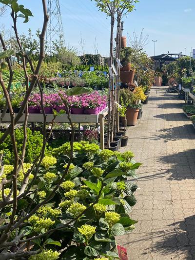 vaste-plantenn-stadskanaal-tuinccentrum-noorden-18