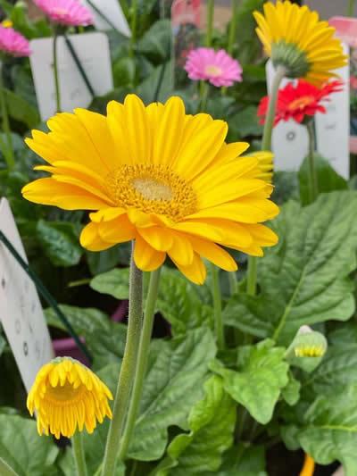 eenjarige-planten-afdeling-tuingroen-stadskanaal-tuincetrum-3
