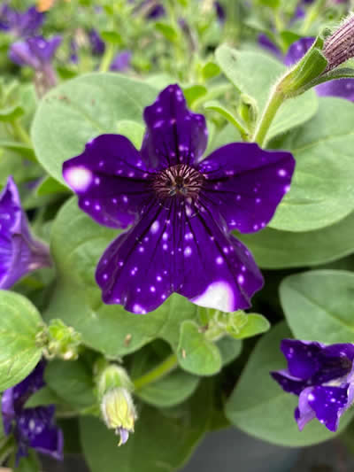 eenjarige-planten-afdeling-tuingroen-stadskanaal-tuincetrum-8