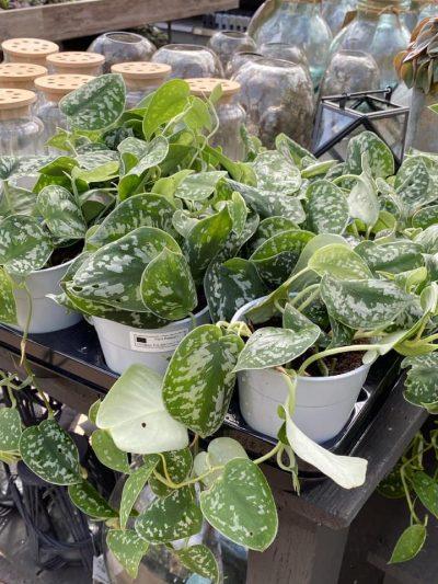 hangplanten-tuingroen-stadskanaal-2