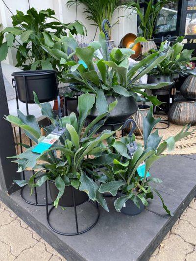 hangplanten-tuingroen-stadskanaal-4