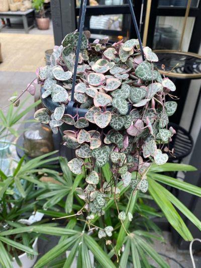 hangplanten-tuingroen-stadskanaal