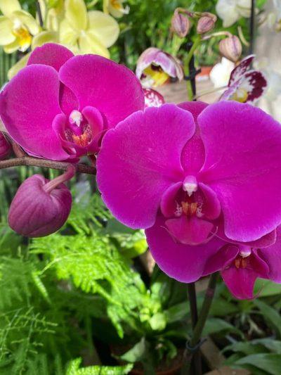 orchidee-tuingroen-stadskanaal