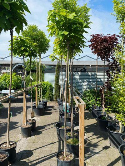 tuingroen-stadskanaal-bomen-1