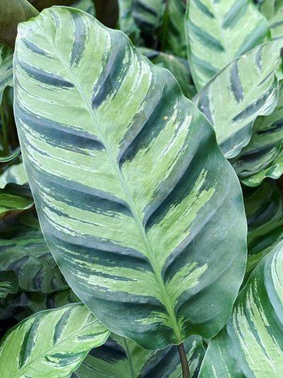 tuingroen-stadskanaal-kamerplanten-3