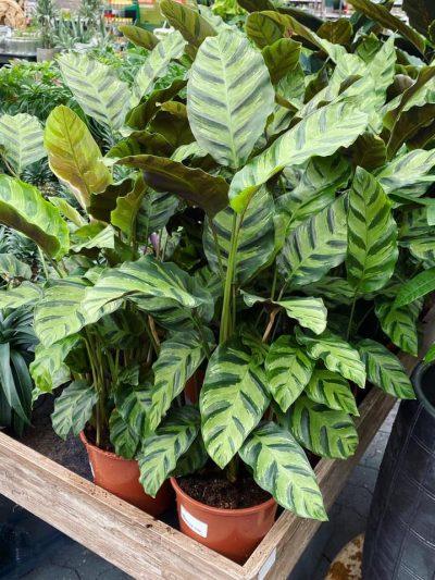 tuingroen-stadskanaal-kamerplanten-4