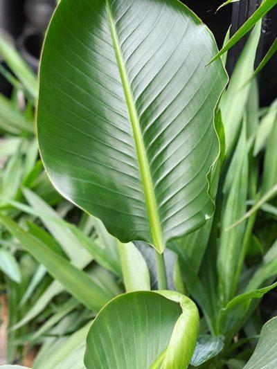 tuingroen-stadskanaal-kamerplanten-6