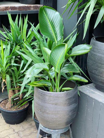 tuingroen-stadskanaal-kamerplanten-9