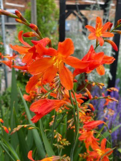 vaste-planten-tuingroen-stadskanaal-1