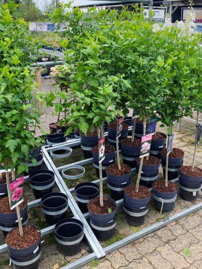 vaste-planten-tuingroen-stadskanaal-33