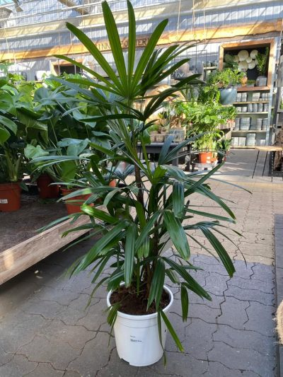 xl-kamerplanten-tuingroen-stadskanaal-1