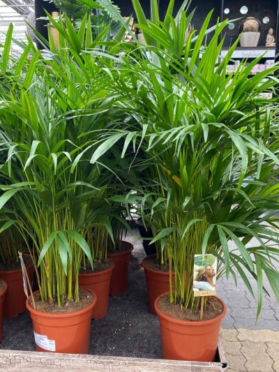 xl-kamerplanten-tuingroen-stadskanaal-2